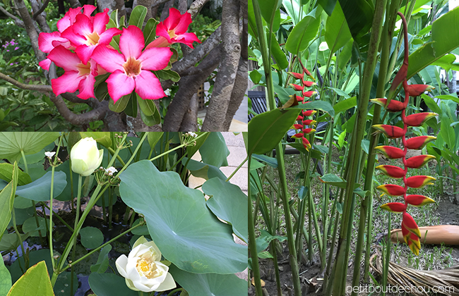 Hoi An Getaway: Lotus Frangipani and Lobster Claw Flowers